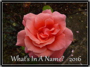 What's in a Name 2016